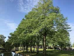 Gemeentelijk bomenbeleid